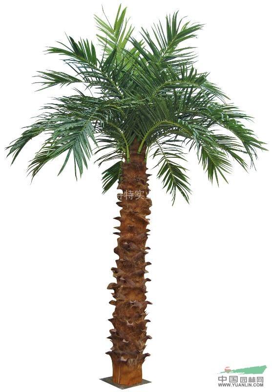 椰子树图片大全椰子树图片大全_第5页_乐乐简笔画