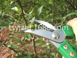 剪枝剪 园林剪 修枝剪 特价销售 各种果枝剪 花奔剪刀
