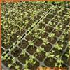 營養土-栽培基質-育苗基質蛭石粉-蔬菜育苗蛭石廠