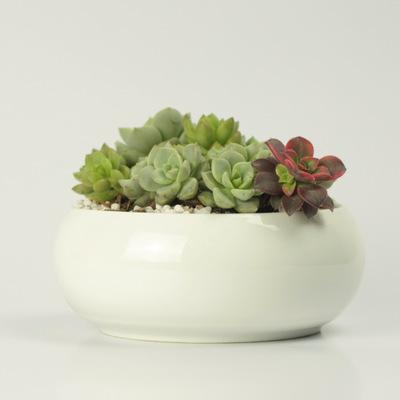 简约白色创意陶瓷多肉圆缸形收口花钵zakka盆栽花盆 工厂直供批发