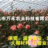 冬暖式大棚  全钢架温室大棚  寿光市万禾农业