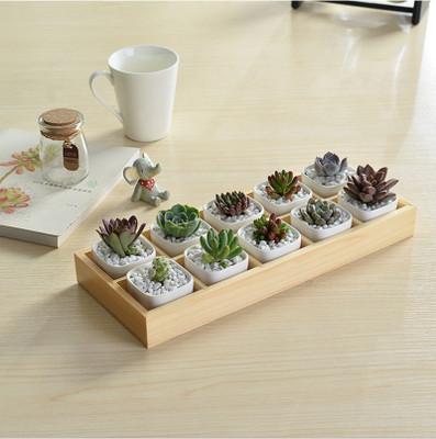 10格多肉植物木盒木质多肉花盆木托盘